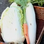 野菜に焼き印